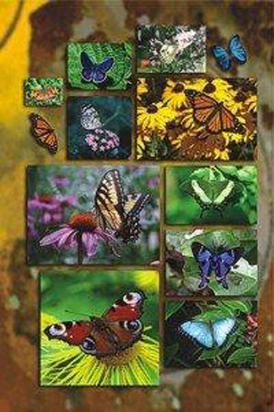 butterflycollage300